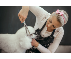 Learn Dog Grooming Training