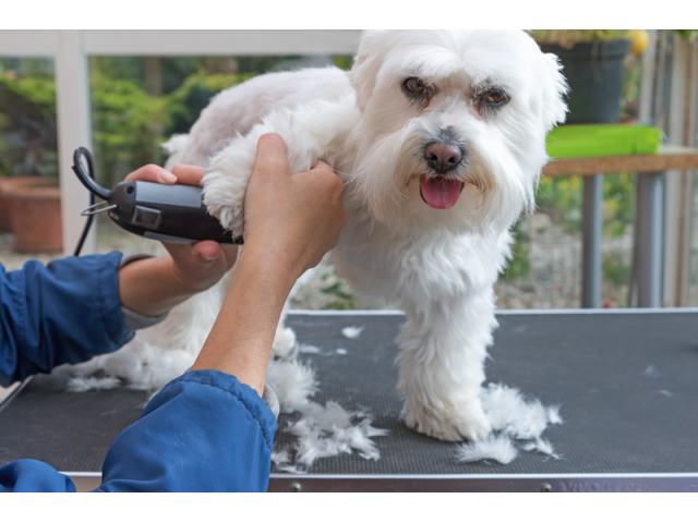 Get High Quality Pet Grooming Education