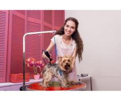 Want To Start Your Own Dog Grooming Business?