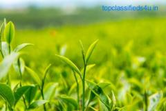Buy Running Tea Gardens For Sale in Darjeeling at Lowest Prices