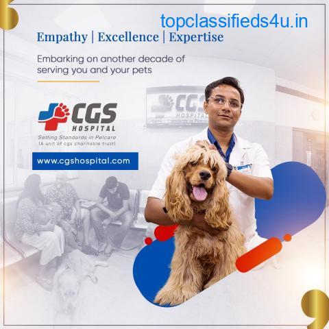 Hospital For Dogs   CGS Hostpital