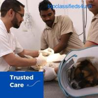 Emergency vet clinic near me | CGSHOSPITAL