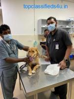 Pet Care Hospital | CGSHOSPITAL